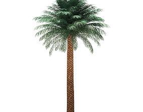 Silver Date Palm Tree 3D Model 8m