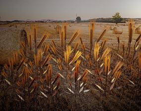 Wheat plant 3D model