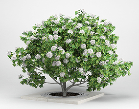 Rhododendron white 3D