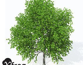 3D model XfrogPlants European Hop Hornbeam