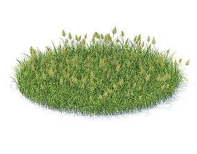 Flowering Grass 3D Model grass