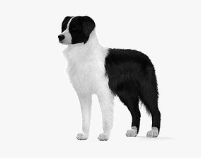 Border Collie HD 3D model