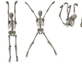 3D asset Skeleton Hanging Poses