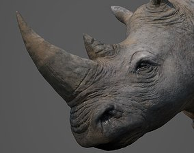3D asset Rhinoceros Head