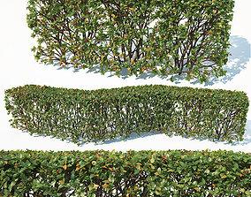 3D Cotoneaster lucidus Nr3 customizable transparent hedge
