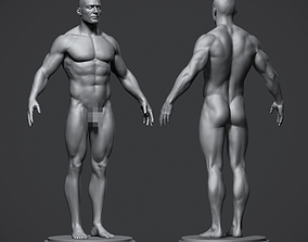 low-poly Male Anatomy Reference Model