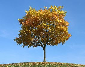 Tree Fall Leaves 3D