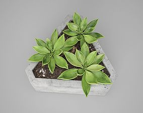 Triangle Concrete Potted Cactus 3D
