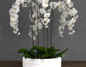 plant 3D Orchid 6