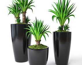 Palm Yucca 3D