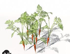 XfrogPlants Carrot 3D model