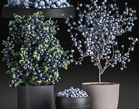 3D Decorative blueberry tree in Pots for the interior 547