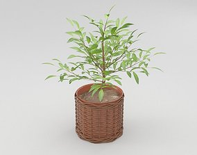 Green Plant in Ceramic Pot 3D model